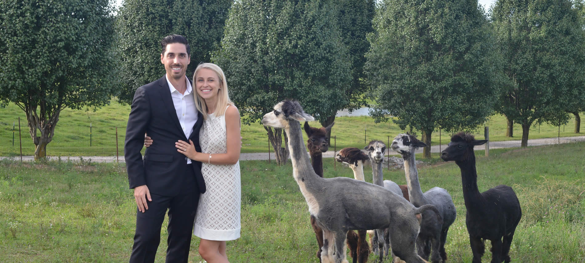 kentucky barn on the farm weddings and receptions couple in field with llamas